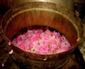 A simple hand made rose water sneakily holistichealthherbalist.com