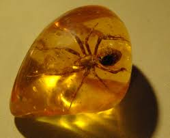 Baltic Amber with a fossilised insect