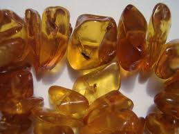 Baltic Amber - from a few different species in the Mediteranean