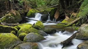 The wonderful flow of nature (australia.com)