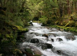 Flow with nature and reap the benefits - pic via www.southernwilderness.com