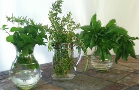 Gorgeous herbs in vases pic via lornaslist.com