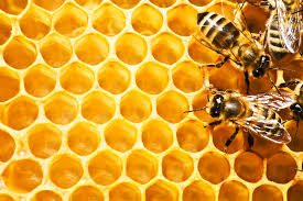 Bees and their beeswax - pic via sweetbeez.org