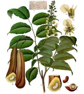 Peru balsam - pic via www.fragrantica.com