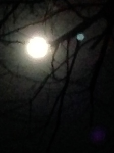 The supermoon through the trees in my backyard in Sydney