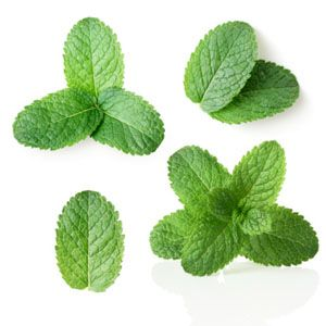 It's hard to tell the difference between spearmint and peppermint just by looking at it - by scent its easy!