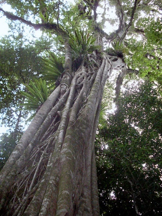 Rosewood in it's natural habitat