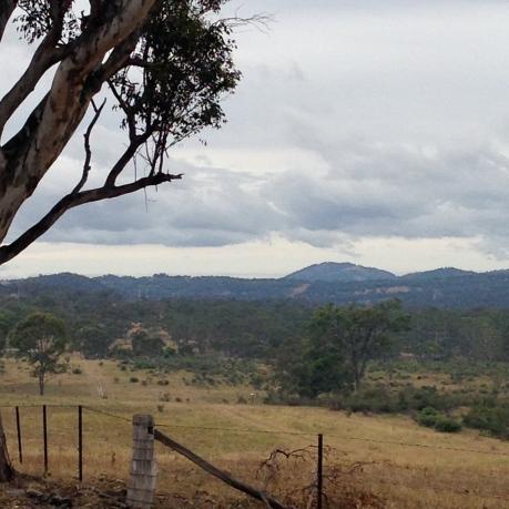 Eucalyptus in the Australian country