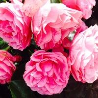 10 Recipes with Rose Essential Oil 3% - Rosa damascaena