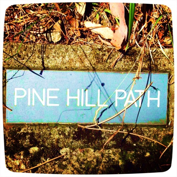 Pine Hill Path in the Wellington Botanic Gardens