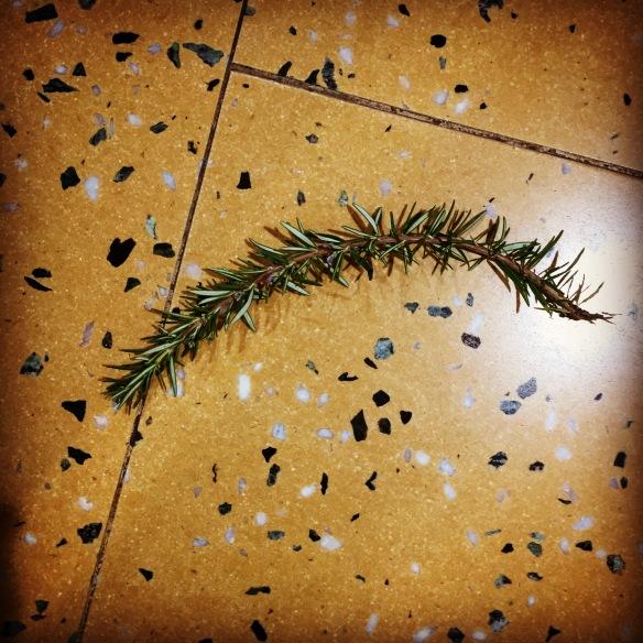 Rosemary on the hospital lobby floor