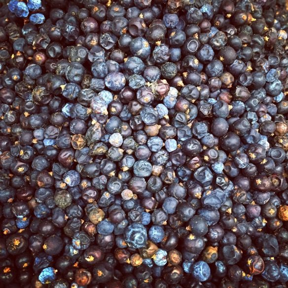 Dried juniper berries at a spice shop in Sydney