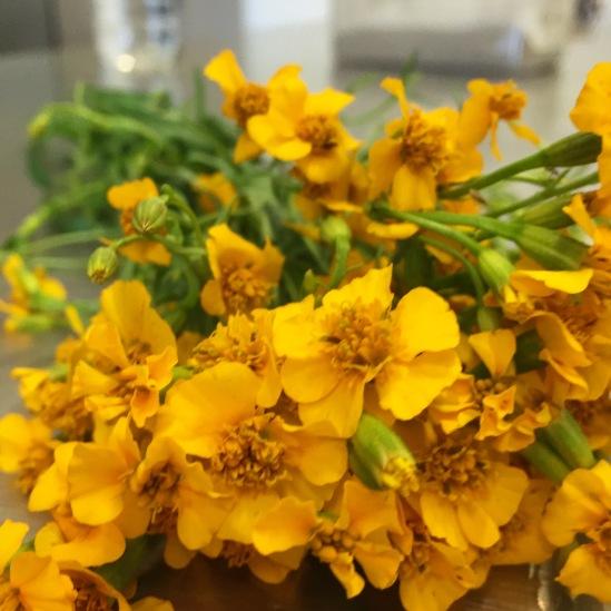 Flowering tarragon