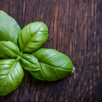 Enliven Your Mind, Make Pesto